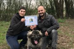 Knut - diploma di cane educato